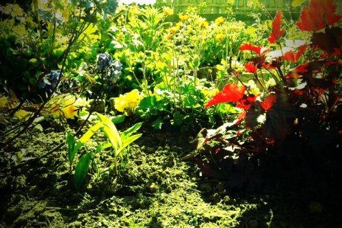 seedlings appearing amongst more established plants