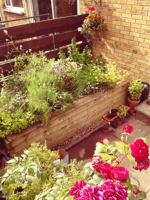 Image of roses and a raised herb garden